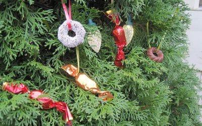 Christmas Tree Chocolates
